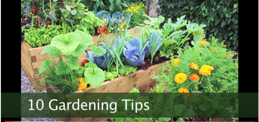 10 Gardening Tips For Survivalists