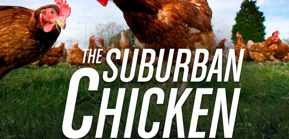 The Suburban Chicken Blueprint [eBook]