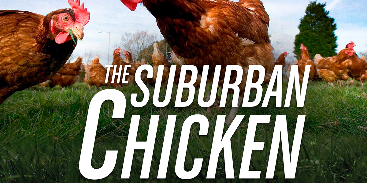 The Suburban Chicken Blueprint
