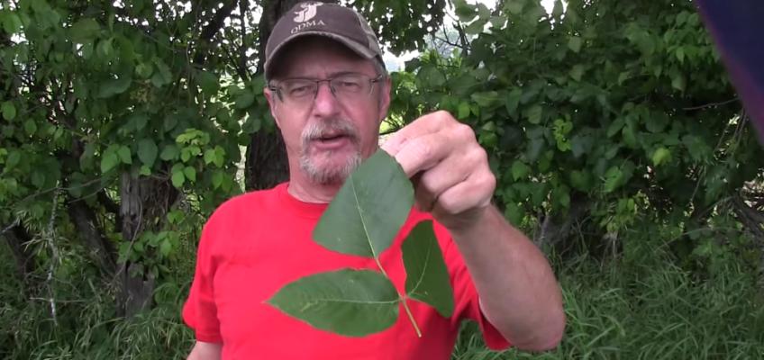 Never Get A Poison Ivy Rash Again