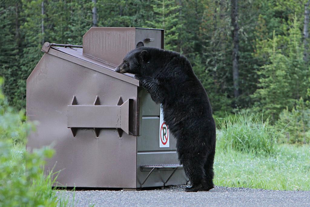 bear-safety-tips