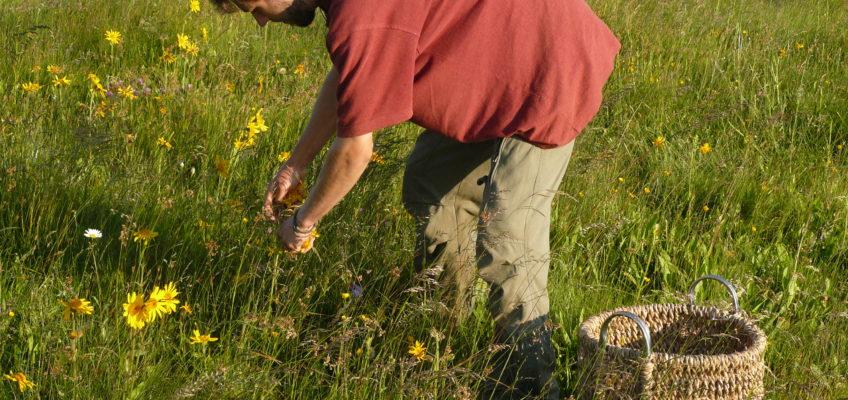 Common Edible Plants in the Wild