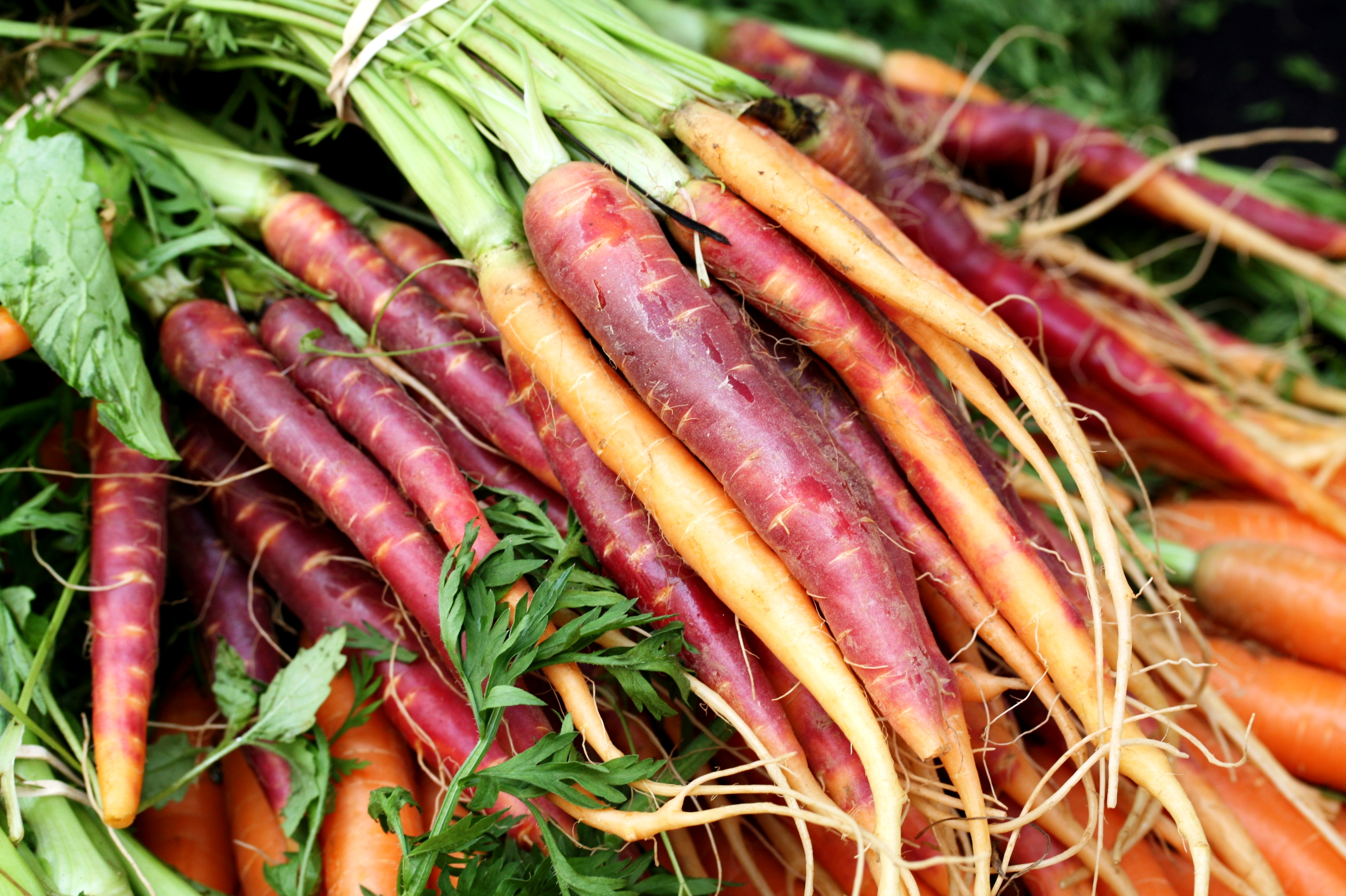 heirloom-carrots