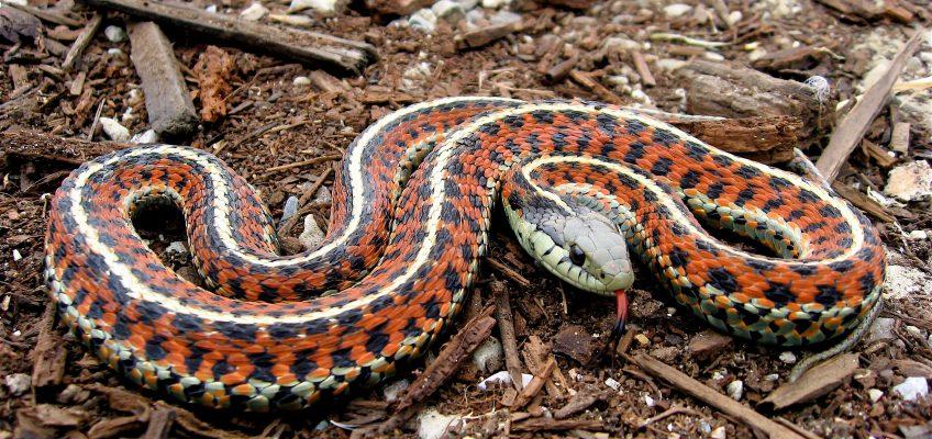 Snake Eaters – Survival Food