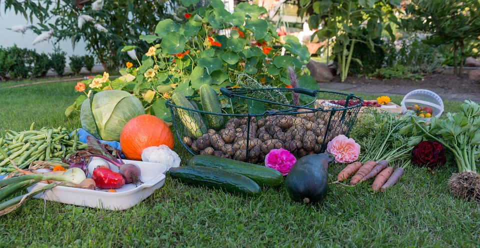 4 Tips to Get More Vegetables Out of Your Garden