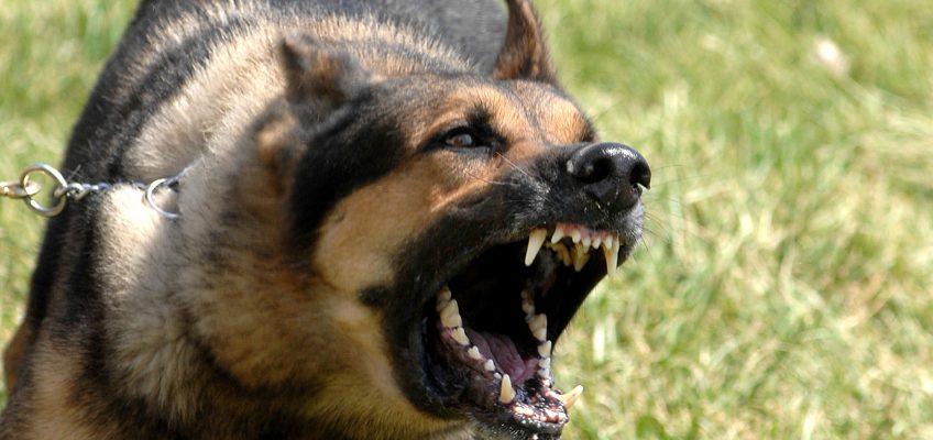 Avoiding and Surviving Animal Attacks