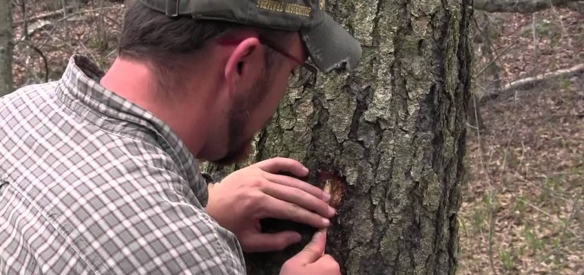 Tapping Trees for Water
