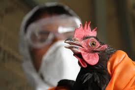 Bird Flu Precautions