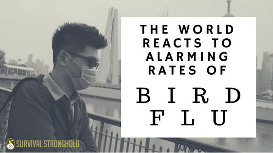 Survival News: Alarming Rates of Bird Flu Around the Globe