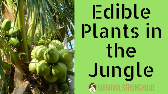 Edible Plants in the Jungle