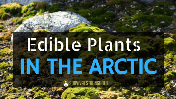 Edible Plants in the Arctic