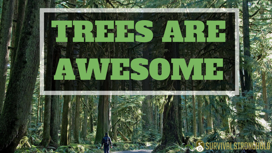 Why Trees Are Awesome