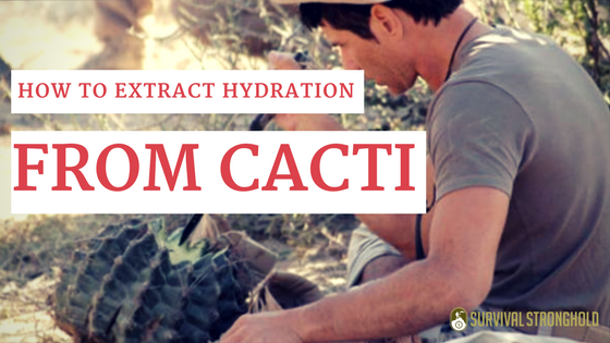 How to Get Hydration From Cacti