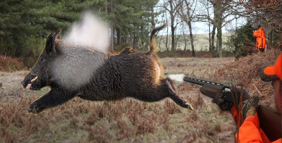 Top 10 Best Shots-Wild Boar Hunting (Video)