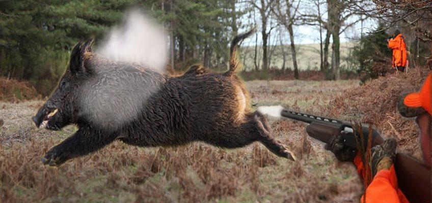 Top 10 Best Shots-Wild Boar Hunting (Video)
