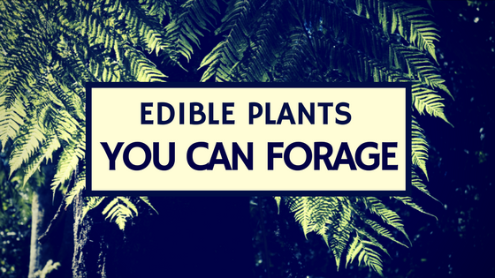 Edible Plants You Can Forage (Infographic)