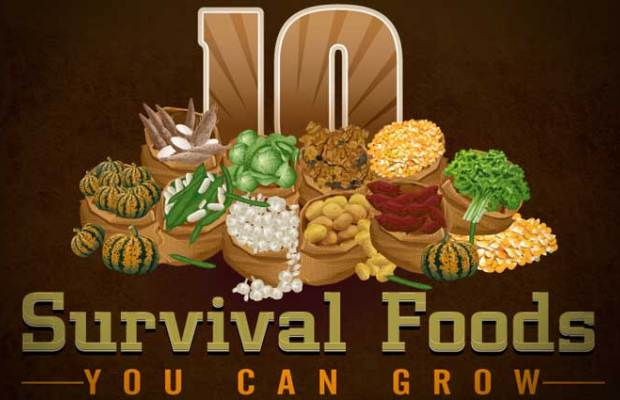 10 Foods You Should Be Growing Yourself (Infographic)