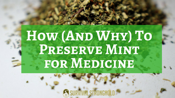 How (And Why) To Preserve Mint for Medicine