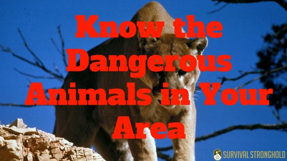 Know the Dangerous Animals in Your Area