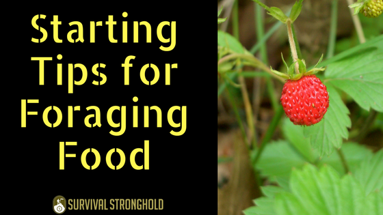 Starting Tips for Foraging Food