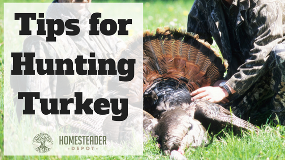 Tips for Hunting Turkey
