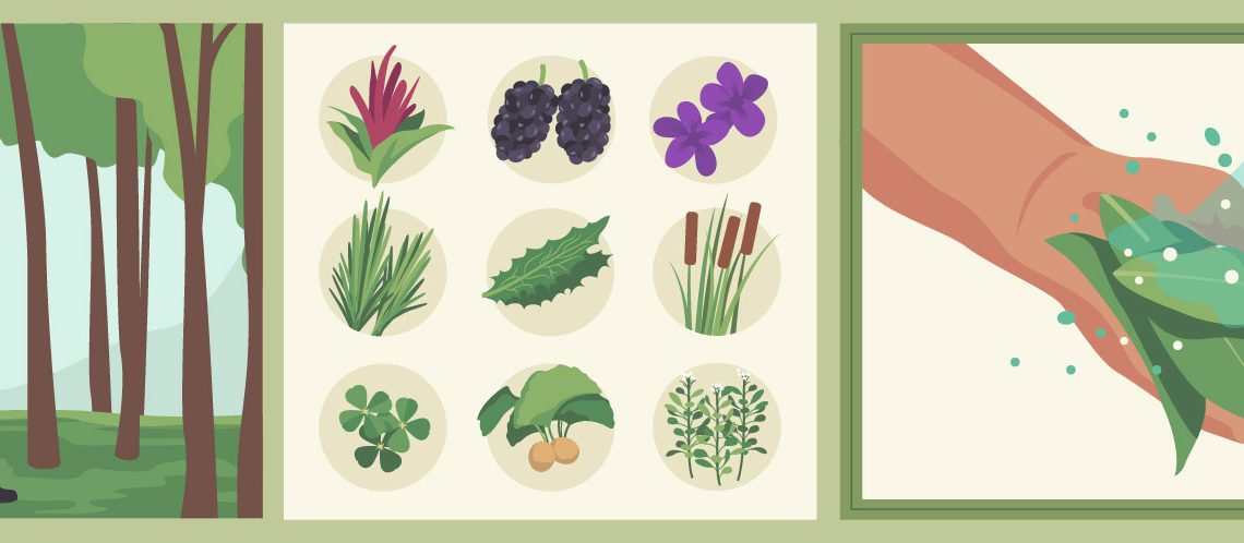 Urban Foraging: A Guide (Infographic)