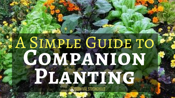 A Simple Guide to Companion Planting