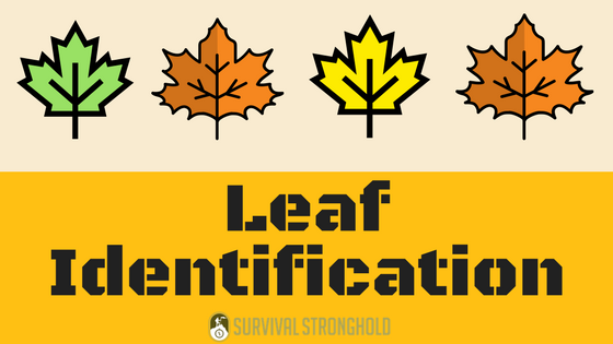 Leaf Identification (Infographic)
