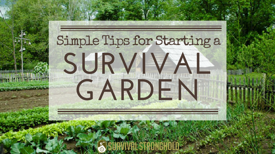 Simple Tips for Starting Your Survival Garden